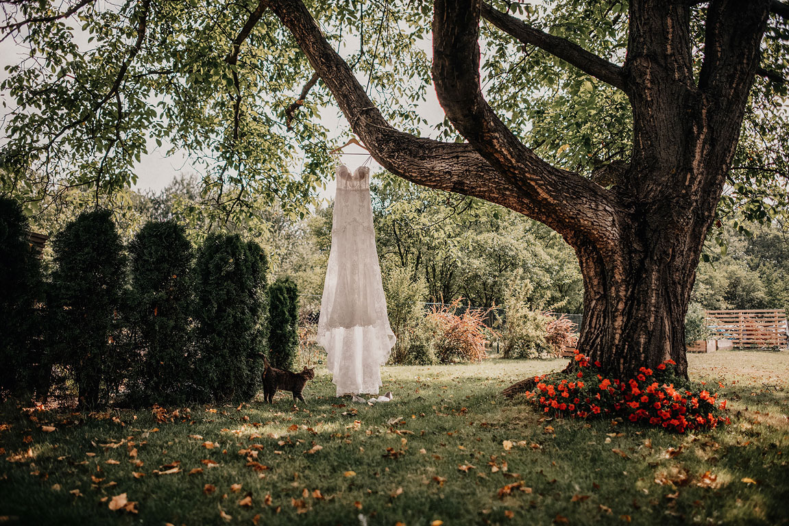 Svatební šaty visící na větvi stromu v zahradě. Kočka se prochází kolem