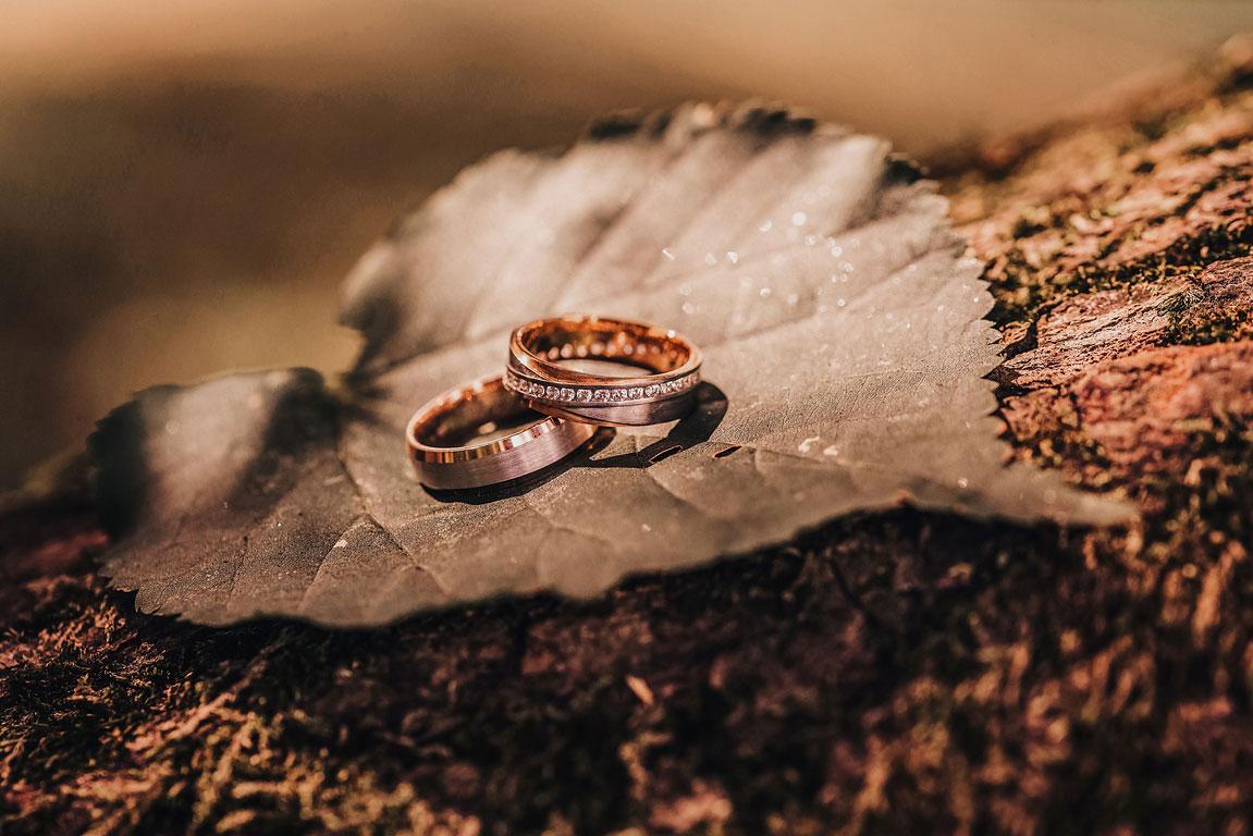 Svatební prsteny ležící na sobě na listu ze stromu při západu slunce